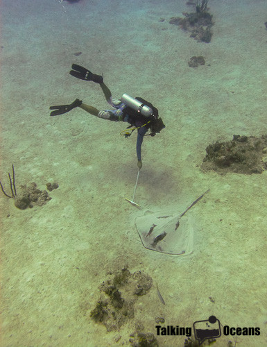 A students measuring stingray size in the Turks & Caicos